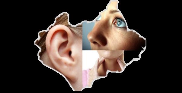گوش و حلق و بینی